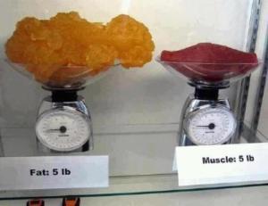 Equivalente em massa, de 2Kg de gordura e músculos.