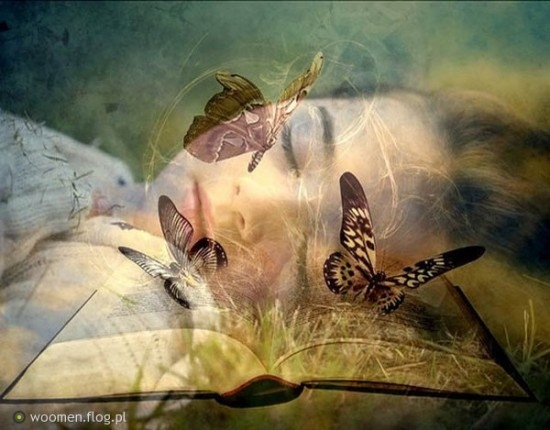 Dreaming Butterfly