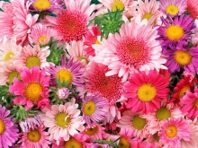 flores-e-rosas